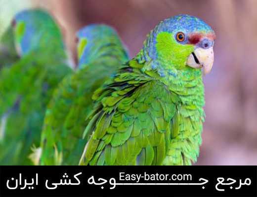 طوطی آمازون تاج بنفش