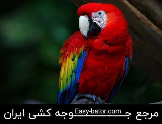 طوطی ماکائو آبی قرمز تیره